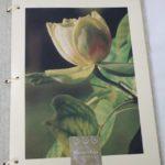 Projet Pierre Vives fleuriste - illustration florale et carte de visite