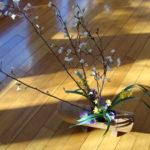 Chrysanthèmes, Narcisses, Cerisier