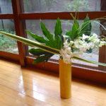 Aralia, New Zealand flax, Beargrass, Cymbidium