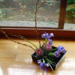 Saule chaton, Iris, Chrysanthème