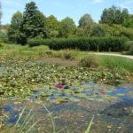 Parc de la Belle - chemin et étang