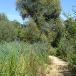 Parc de la Belle - Allée de terre et de tasseaux de bois