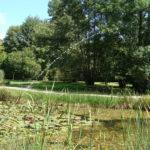 Parc de la Belle - Jet d'eau sur l'étang