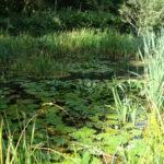 Parc de la Belle - L'étang